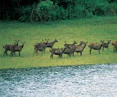 Bharatpur Tourism Package